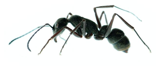 ants summer