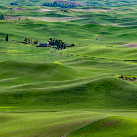 Green fields by Chris Bartell - Landscapes Prairies, Meadows & Fields ( spring, 2018, june, palouse, washington )