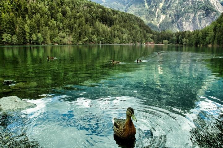 Lago alpino di manu70