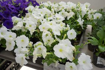 みのりっち北竜を飾る花
