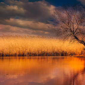 Winter in Danube Delta by Tomita Savastre - Landscapes Waterscapes ( clouds, reflections, colours )