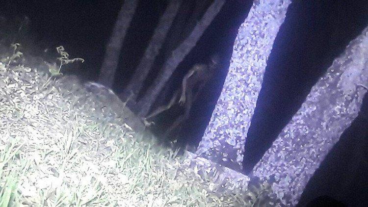 Hình ảnh sinh vật giống người ngoài hành tinh được chụp trong rừng ở Argentina.