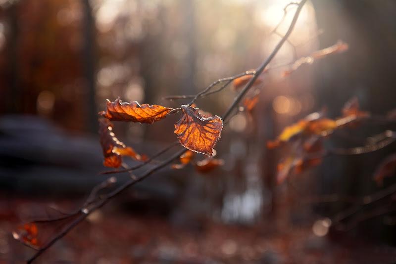 .. si sta come d'autunno.. sugli alberi ...le foglie di Ale27
