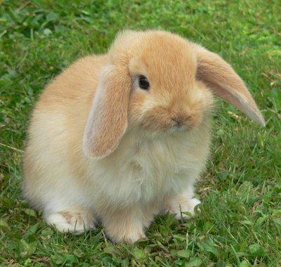 bunny O coelho triste   Curiosidades