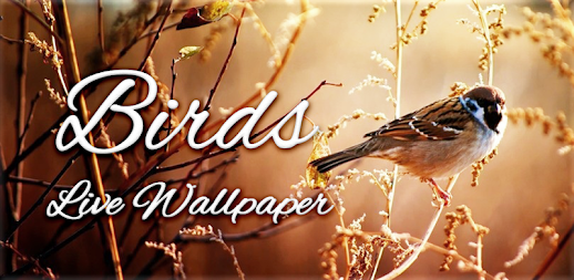 Birds Live Wallpaper APK