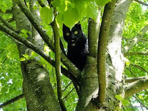 Photo: Hallie thinks she's stuck up a tree!