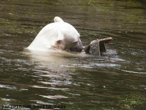 Photo: Knut hat das Aussie Ding hervorgezaubert ;-)