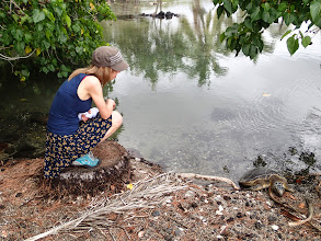 Photo: Hol gets to see her first turtle (at Kiholo Bay).