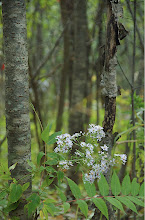 Photo: Flowers in the Forest
