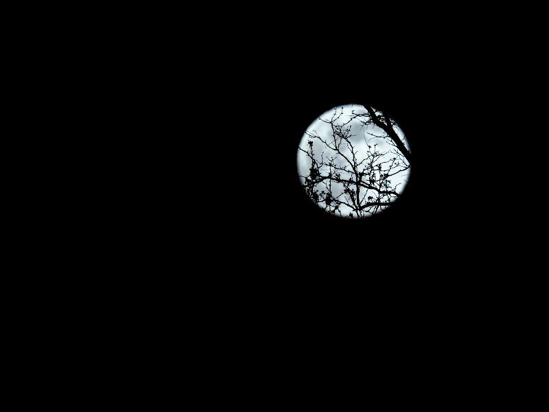 Notte di luna piena di Elio_R