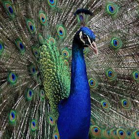 by Jon Sellers - Animals Birds