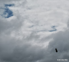Photo: 1304    Windy day with a vulture sailing overhead.    HALS Public Run Day 2013-0921 RPW