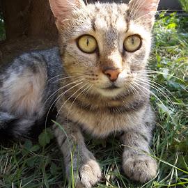 Котка by Georgi Kolev - Animals - Cats Portraits ( треви., слънце., сенки., котка., ден. )
