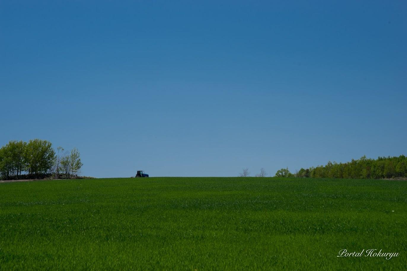 青と緑の風景