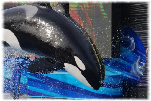 Orca Whales Wallpaper Pics Apk Download 3