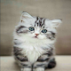 Cute little kittens and names Download for PC Windows 10/8/7
