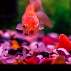 OMG by Gopichand Kokirkar - Animals Fish ( nature, dubai, fish, aquarium, uae, nikon )