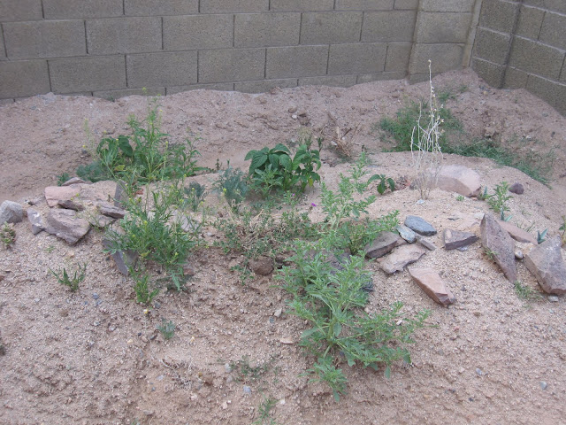 Desert Plants for Tortoises