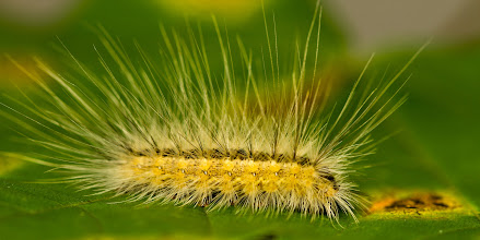 Photo: Look at all that fluffy caterpillary goodness !