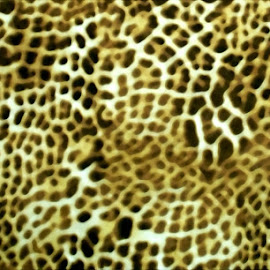 Animal Abstract 2 by RMC Rochester - Abstract Patterns ( macro, random, art, shirt, abstract, colors, object )