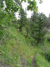 Photo: elk holding their own