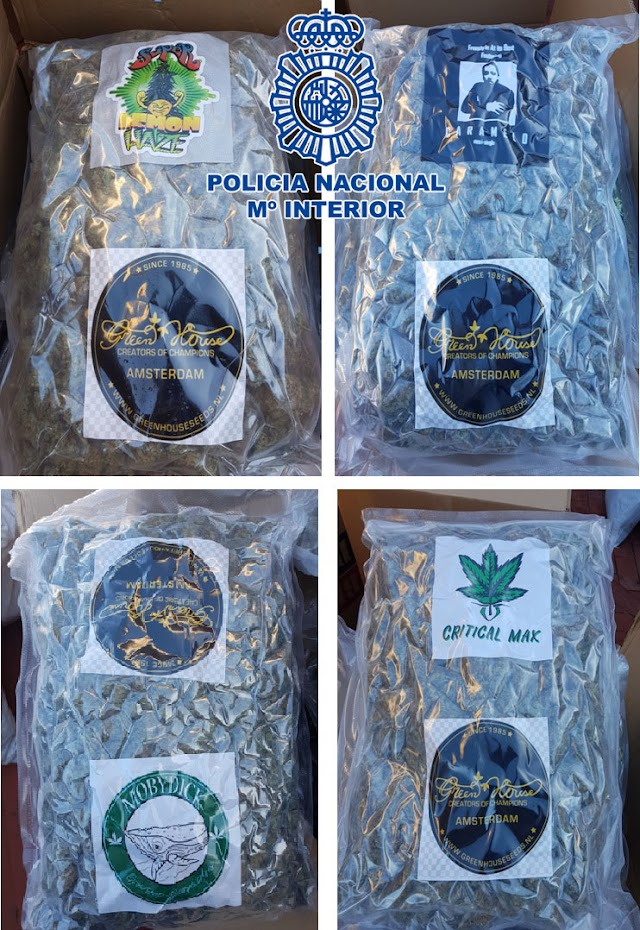 Se encontraron 178 bolsas de cogollos de marihuana.