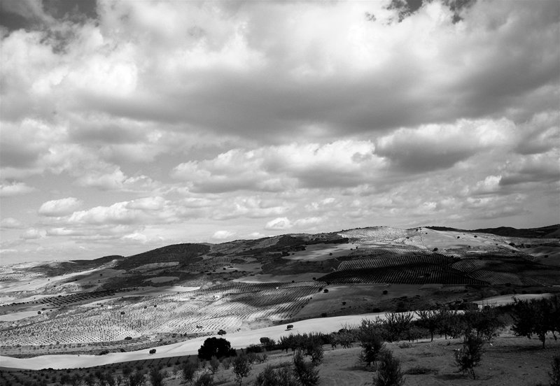 olive groves and clouds; click for previous post