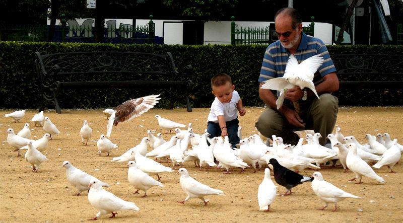 feeding the birds; click for previous post