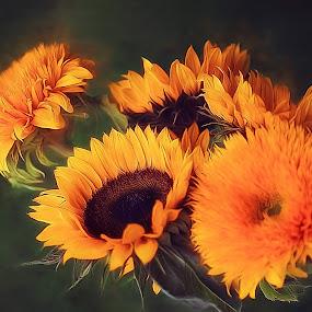 Sunflowers by CLINT HUDSON - Flowers Flower Arangements ( colour, yellow, sunflowers, sun, summer, flower )