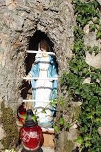 Photo: Die Madonna im Baum