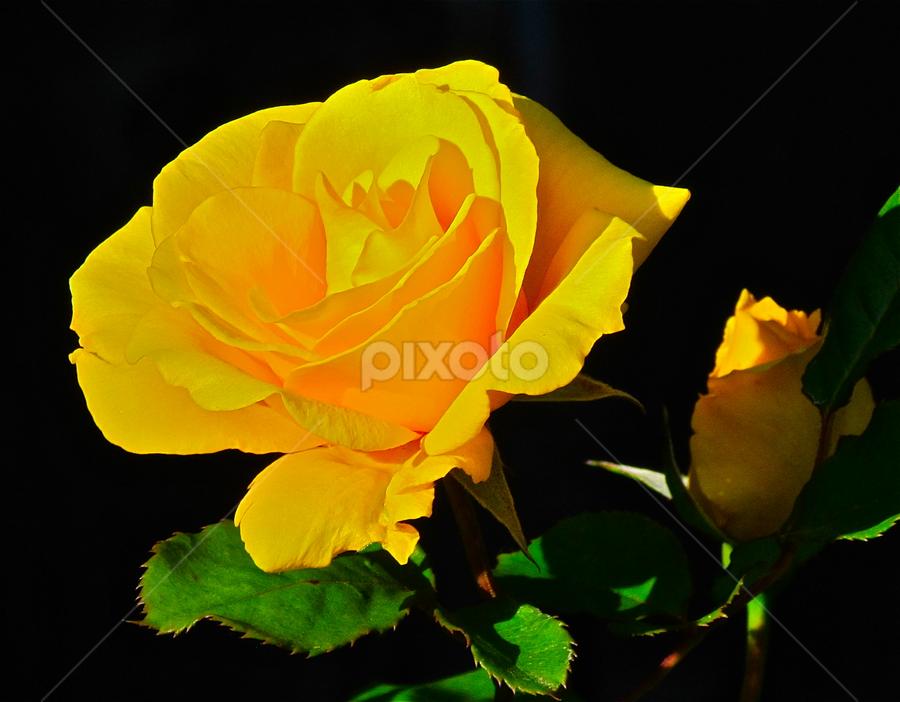 by Mai Wheeler - Nature Up Close Flowers - 2011-2013