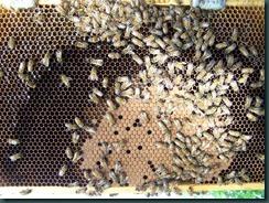 Bee 004