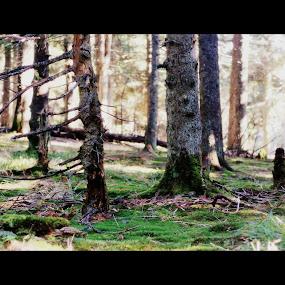 by Otetea Ovidiu - Nature Up Close Trees & Bushes ( #GARYFONGDRAMATICLIGHT, #WTFBOBDAVIS )