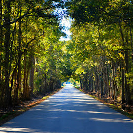 Leslie's Road by Rhonda Kay - Transportation Roads (  )