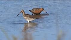 Ejemplares de aves acuáticas en una de las charcas de la Algaida.