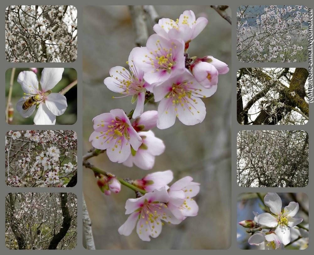 Baram-collage-a