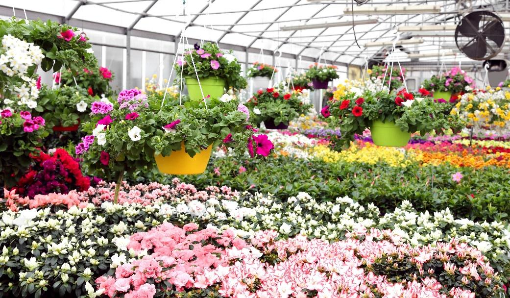 A picture containing flower, outdoor, greenhouse, plant  Description automatically generated