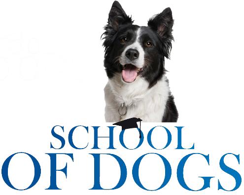 School of Dogs