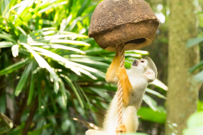 Singapore River Safari Squirrel Monkey Forest2