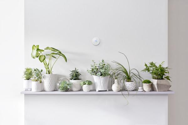 Thermostat Nest placé sur un mur au-dessus de plantes vertes