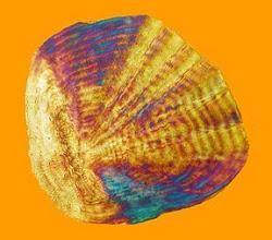 Photo: Fish scale - photo miltoncontact.com