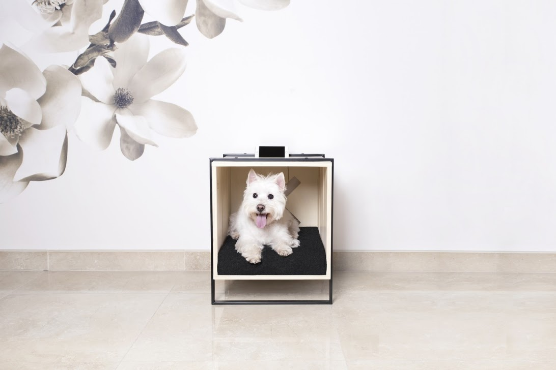 Thiết kế nội thất đa chức năng thân thiện với thú cưng