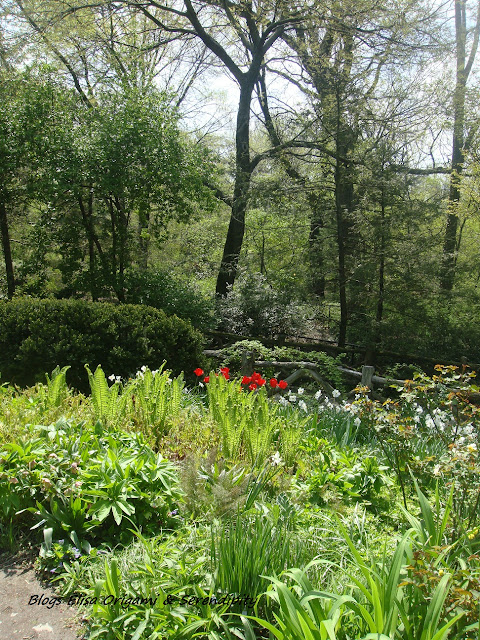 Shakespeare Garden, Central Park, New York, Manhattan, Elisa N, Blog de Viajes, Lifestyle, Travel