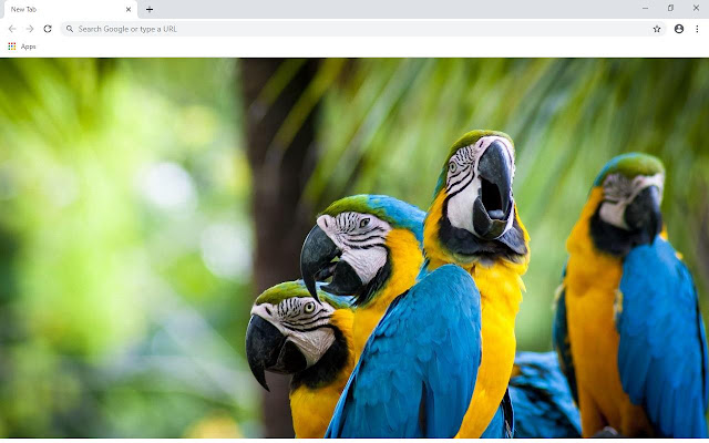 Parrot Wallpapers and New Tab