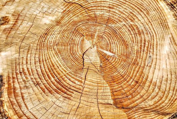 La storia di un albero  di StePh