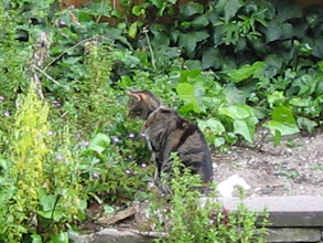 Photo: George, waiting near the patch of weeds where all the mice live.
