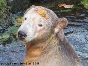 Photo: Knut mit bezaubernder Herbstdeko im Wasser :-)