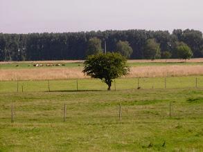 Photo: Blick auf Wolwenweide 1.7.07
