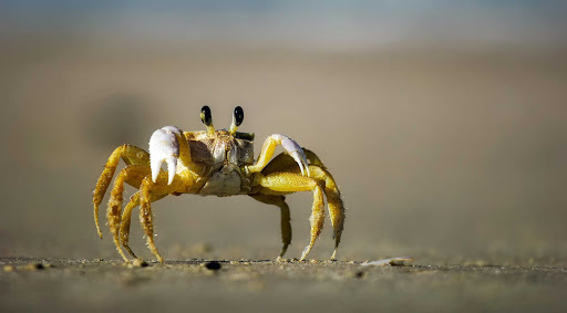 A crab spotted on the beach in Mexico.