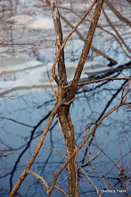 Photo: Branches clasping